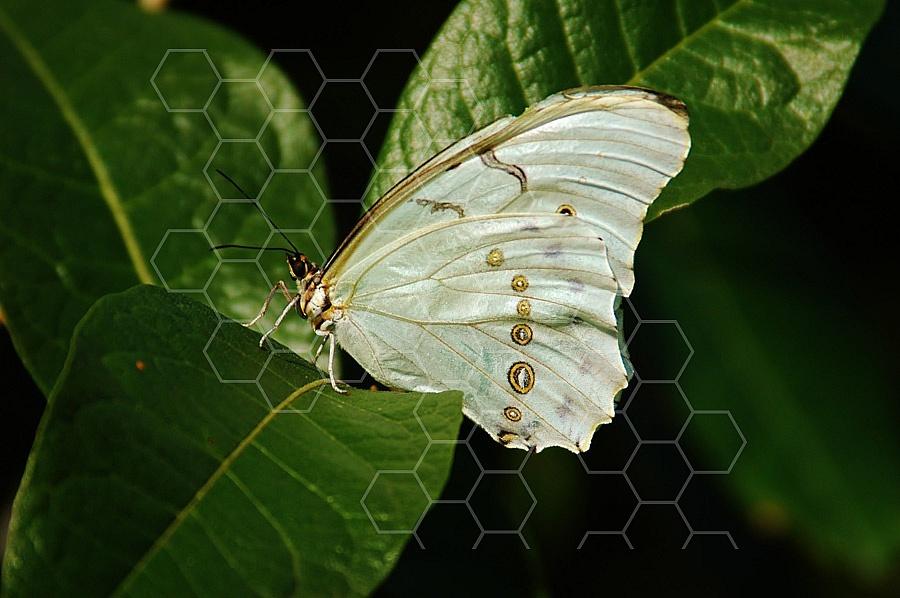 Butterfly 0010