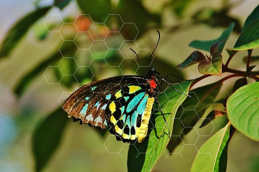 Butterfly 0030