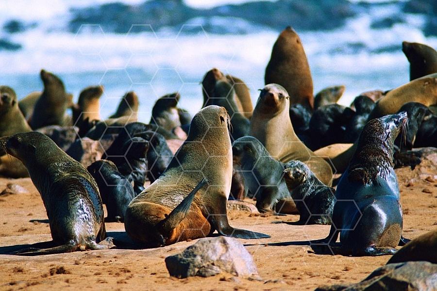 Seal Fish 0003