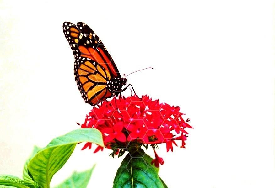 Butterfly 0049