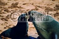 Seal Fish 0010