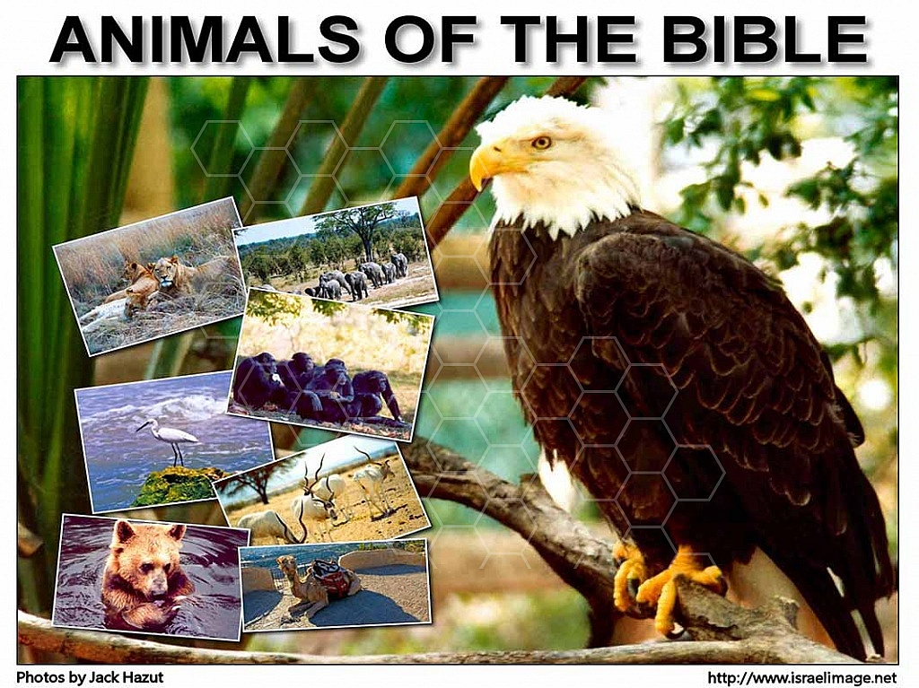 The Animals Of The Bible 004