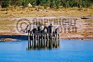 Elephant 0033