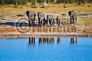 Elephant 0025