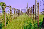 Majdanek Barbed Wire Fence 0009