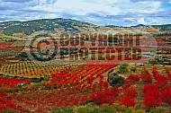 Foliage Spain 002
