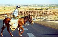 Donkey 0001