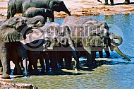 Elephant 0014