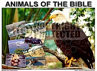 Animals Of The Bible 002