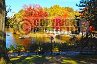 Foliage New York City Central Park 011