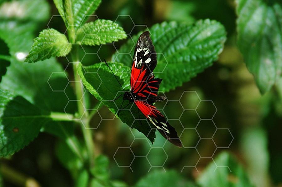 Butterfly 0027