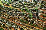 Judaean Hills 0022