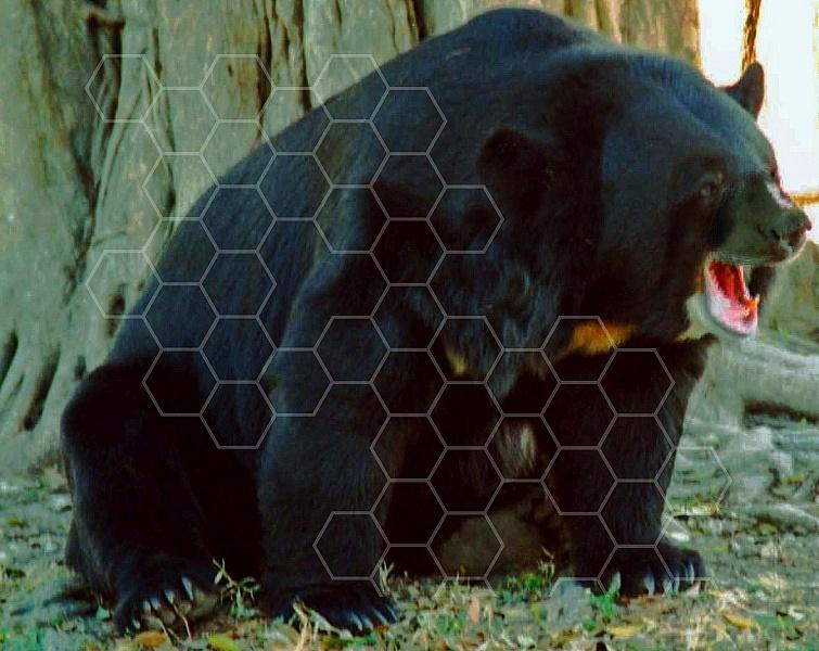 Bear 0011