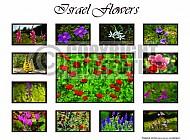 Israel Flowers 004