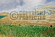 Golan Heights 006