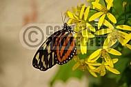 Butterfly 0009