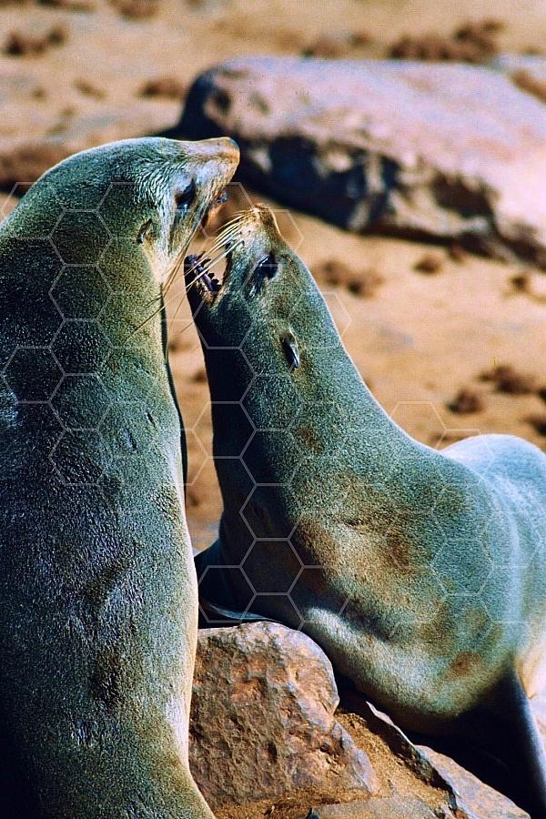 Seal Fish 0021
