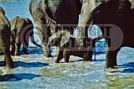 Elephant 0034