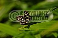 Butterfly 0033