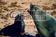 Seal Fish 0011