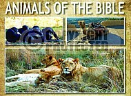 The Animals Of The Bible 003