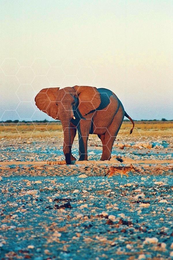 Elephant 0088