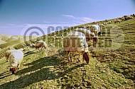 Sheep 0001