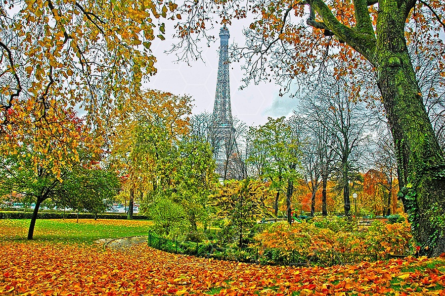 Foliage Paris French 001