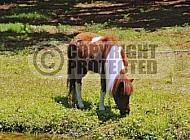 Horse 0018