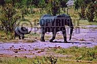 Elephant 0037