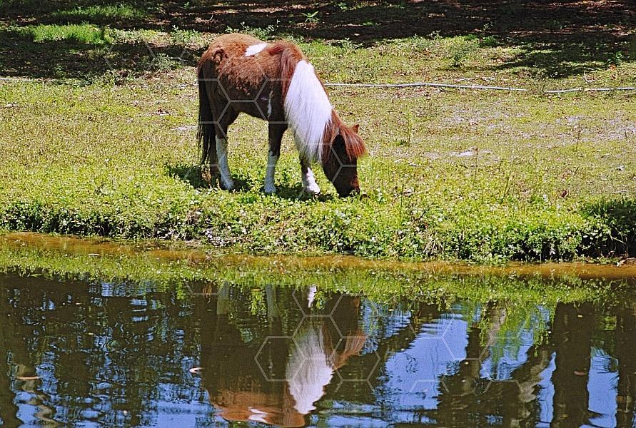 Horse 0012