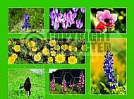 Israel Flora 005