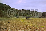 Mount Solomon 0012
