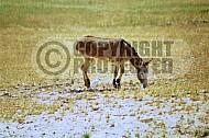 Donkey 0002