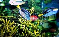 Fish 0006