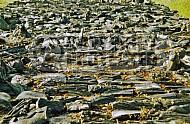 Treblinka Ashes Memorial 0004
