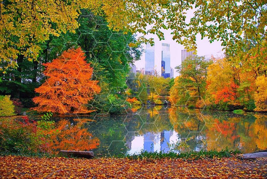 Foliage New York City Central Park 004