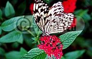Butterfly 0046