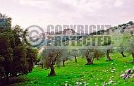 Kalat Nimrod View 002