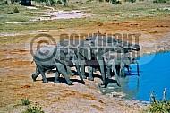 Elephant 0024