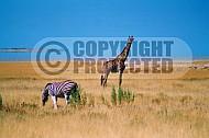 Giraffe 0010
