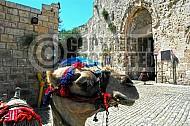 Jerusalem Old City Zion Gate 002