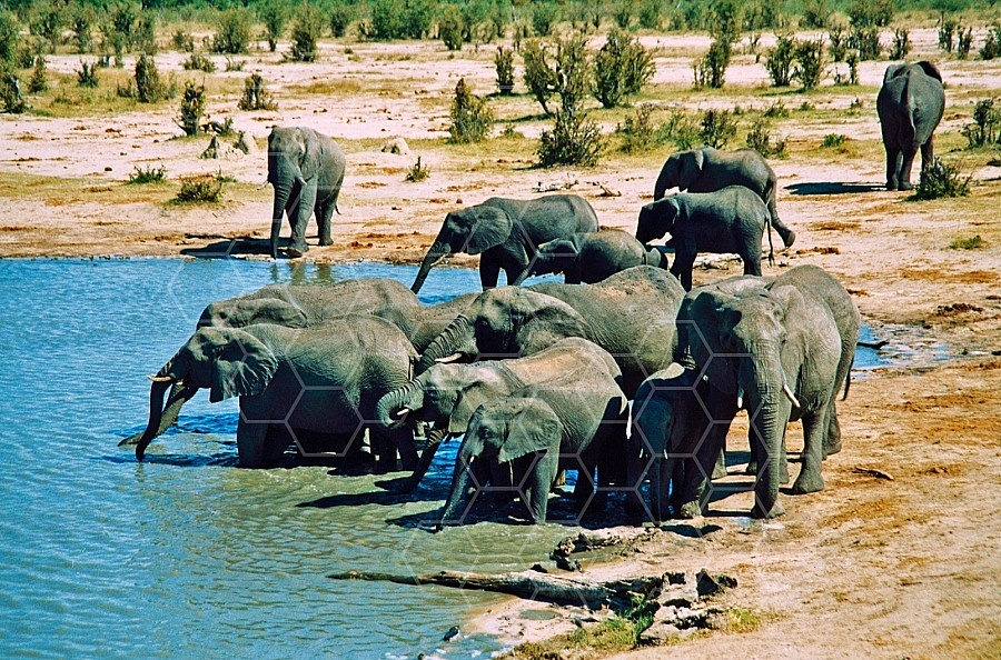 Elephant 0052