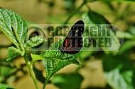 Butterfly 0026
