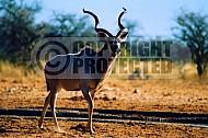 Kudu 0007