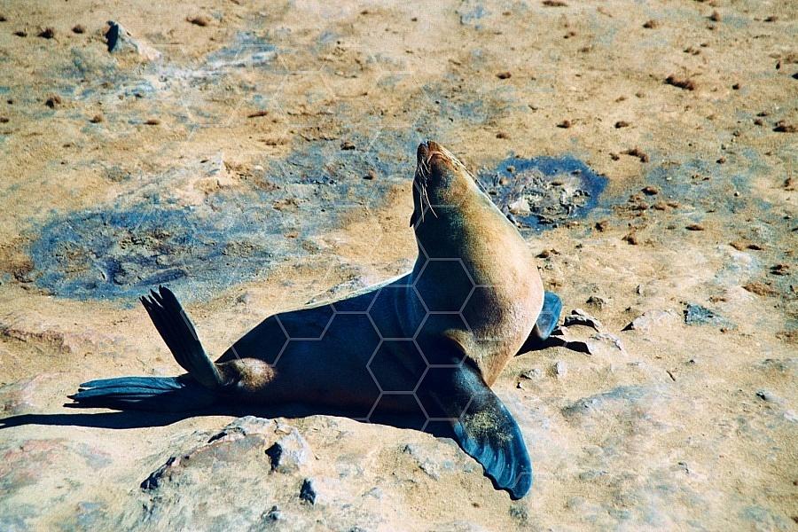 Seal Fish 0002