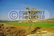 Elah Valley 0009