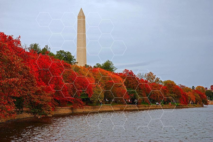 Foliage Washington Dc 006