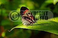 Butterfly 0023