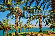 Sea Of Galilee 013